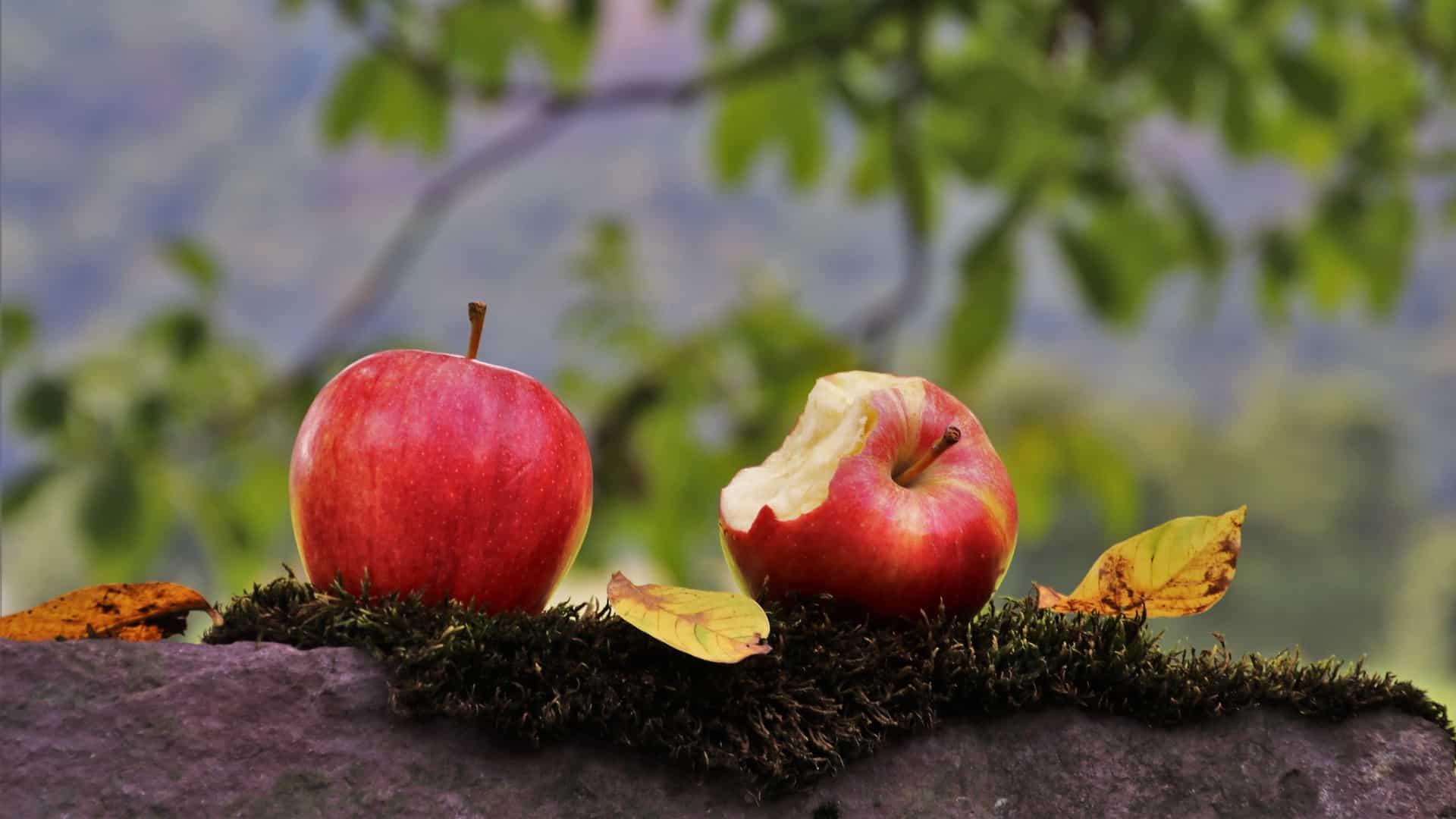 Apfelschneider: Test & Empfehlungen (10/20)